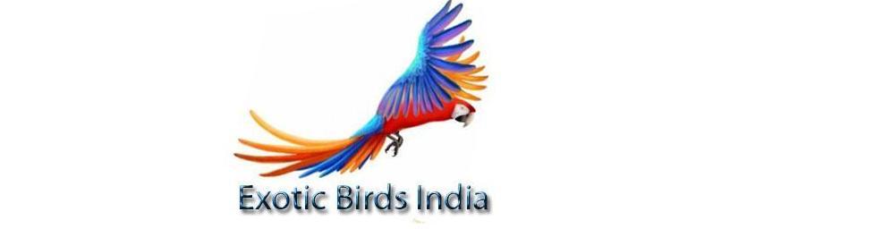 Exotic Birds India