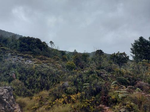 Secretaría de Ambiente de Boyacá realiza visitas a predios de interés hídrico, propiedad del departamento