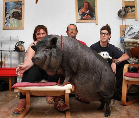 familia con cerda posando en el salon