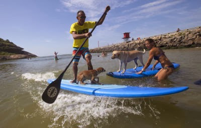 Brazil Surfer Dogs