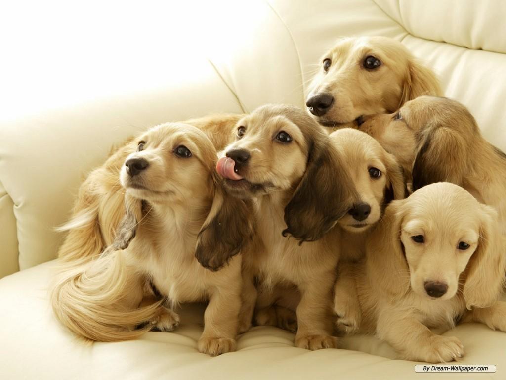Nós, os Cachorros...