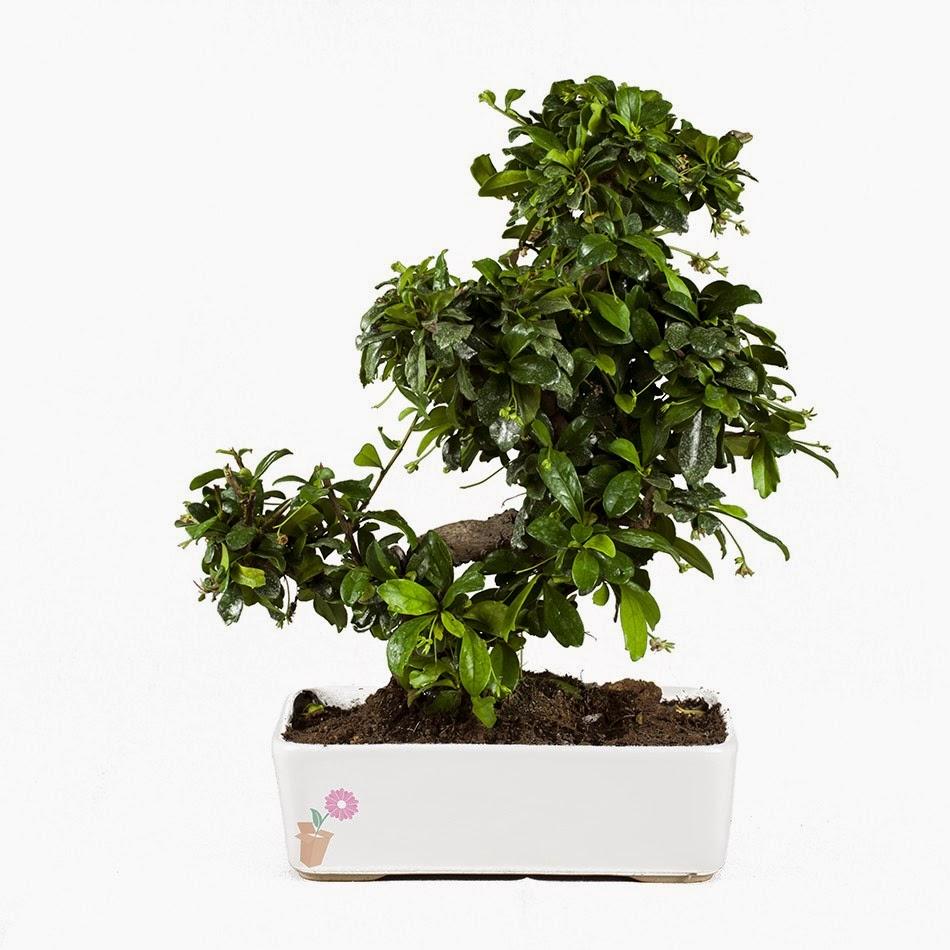 Primavera Arrivatae Plants La Pianta Che Aspettavi Food