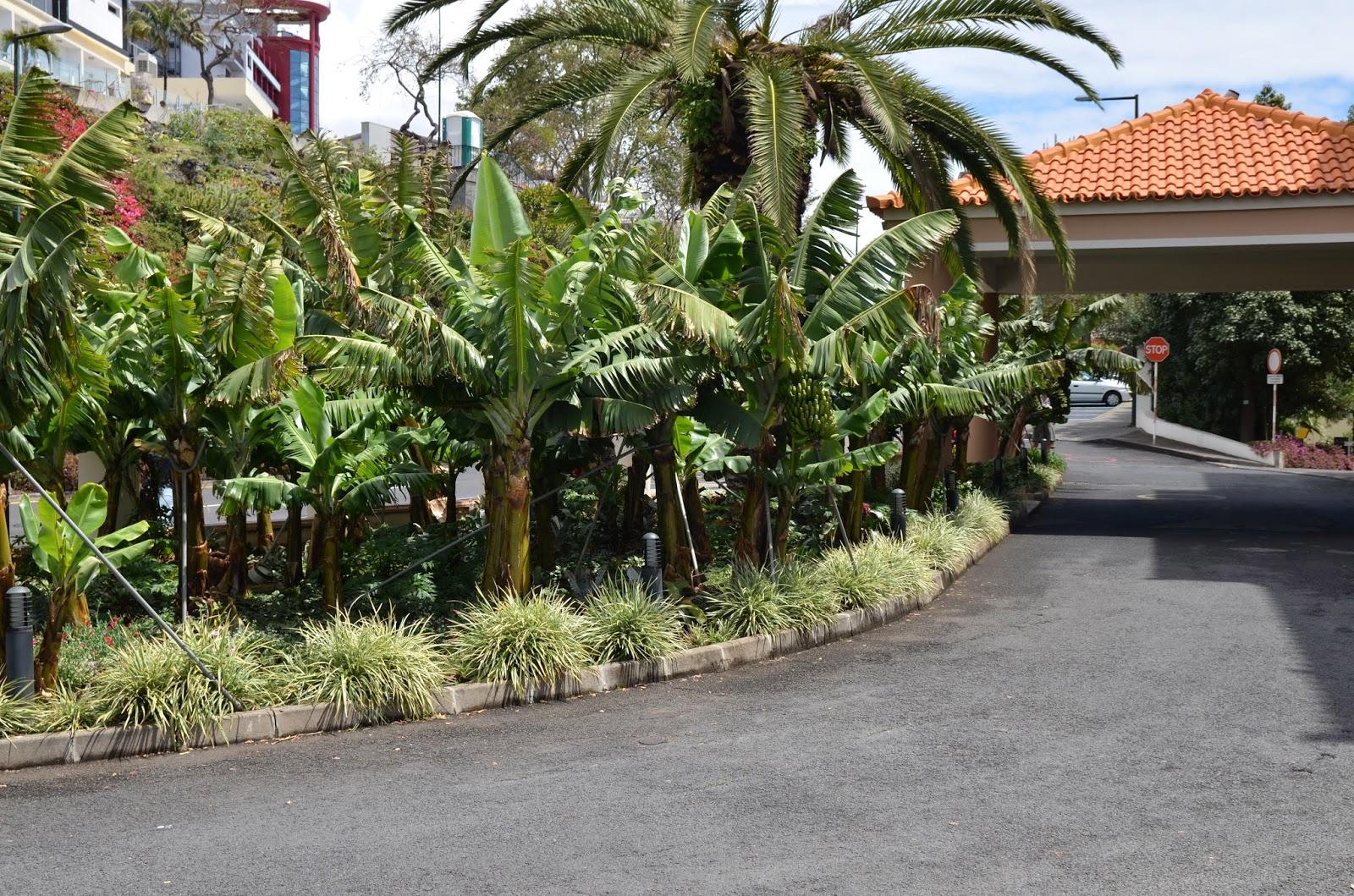mellom palmer og bananer