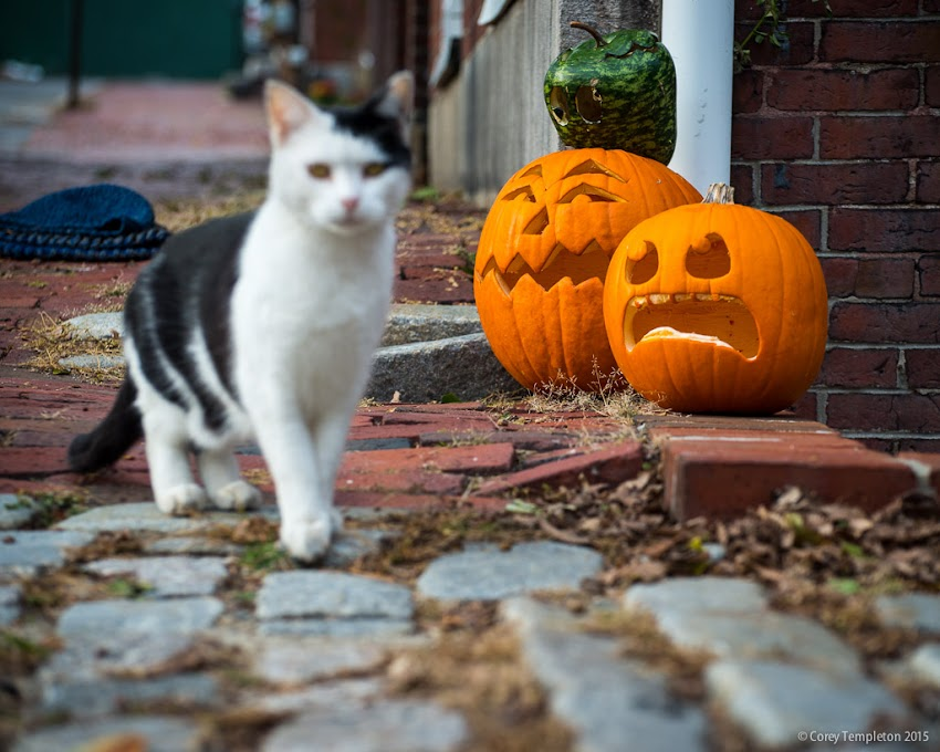Portland, Maine October 31, 2015 Halloween on South Street with carved pumpkins and cat. Photo by Corey Templeton.