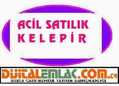 http://www.dijitalemlak.com.tr/ilan/2325983_karacabey-yenikaraagacta-4700-m2-yatirimlik-satilik-arazi.html