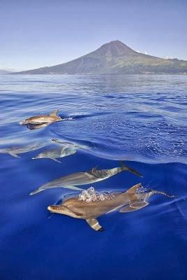 El avistamiento de delfines y las ballenas es típico en la isla de Pico