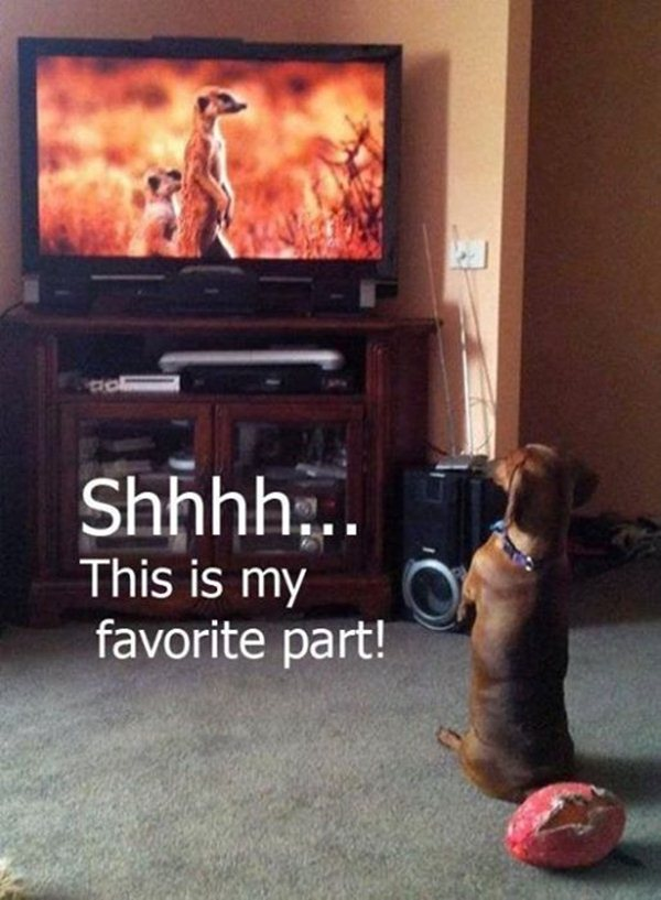 30 Funny animal captions - part 12 (30 pics), animal memes, animal pictures with captions, funny memes, funny animals