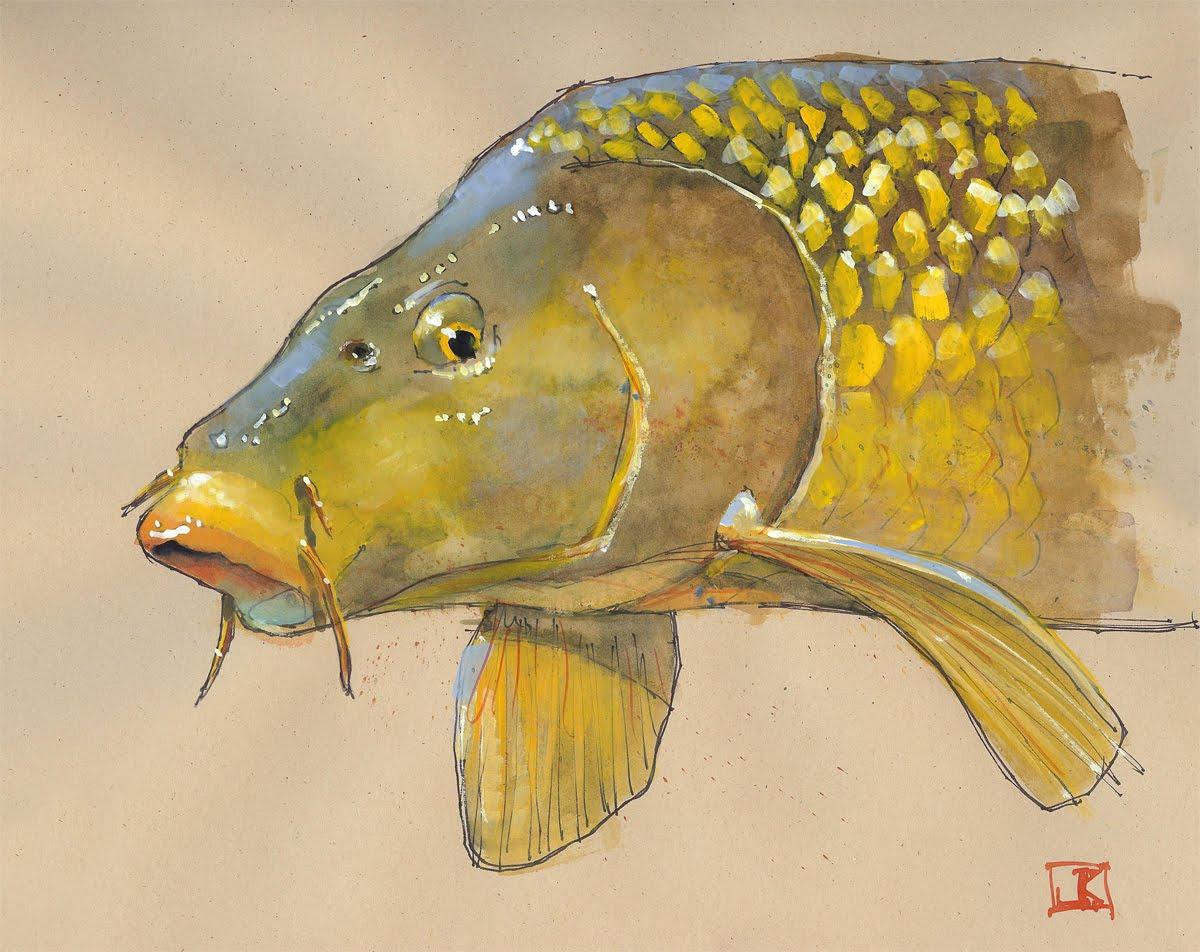 Drawing flies 365 drawing fish 52 13 golden bone for P o fish