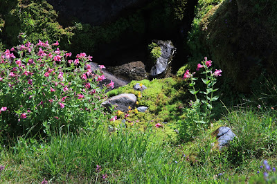 Alpine Meadow Spring with Monkeyflower