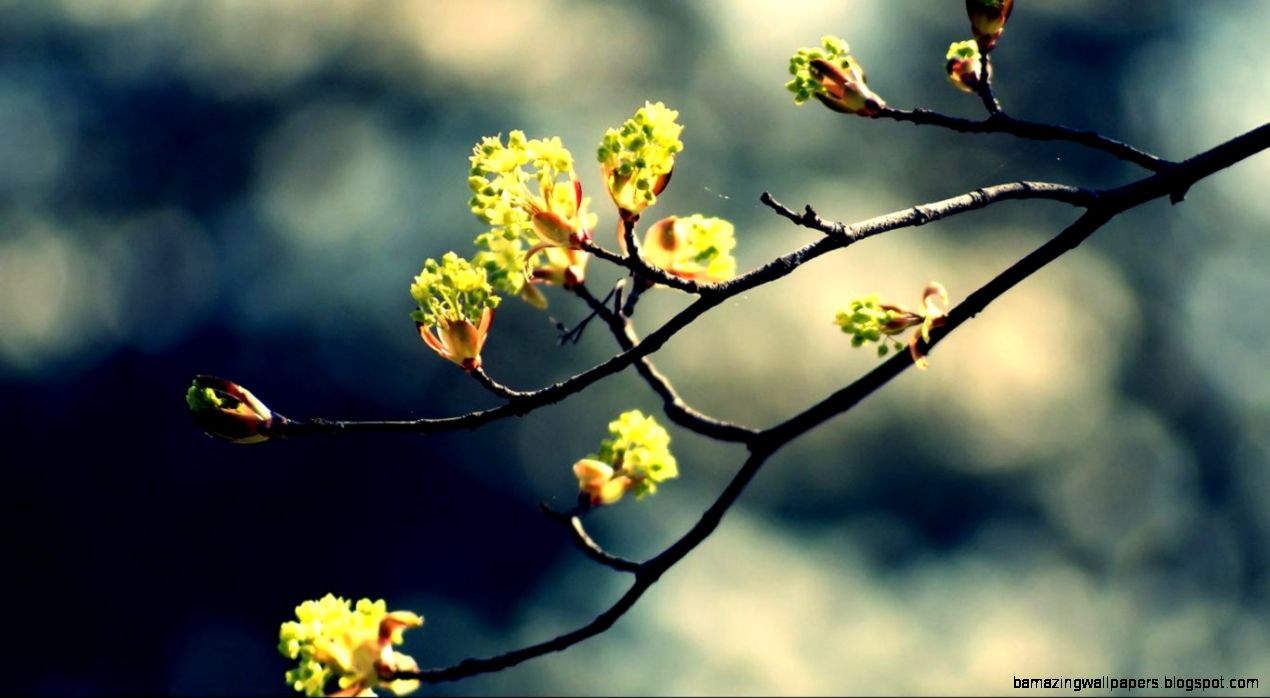 Spring HD Wallpaper Widescreen   WallpaperSafari
