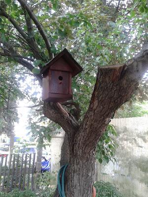 Nistkasten im Pflaumenbaum