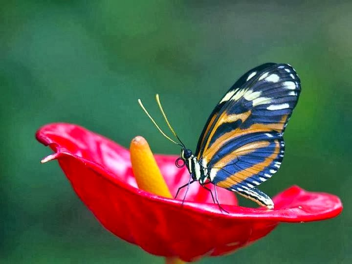 Butterfly in flower