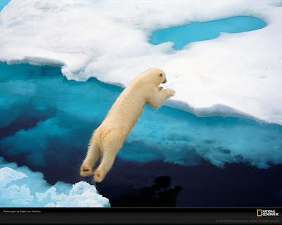 http://3.bp.blogspot.com/-pALh1ceWeMQ/Tbx9S5tjGXI/AAAAAAAAAiA/EEUPt3Ru_FM/s1600/blue-polar-bear-wallpaper.jpg