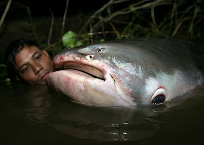 9 most weird fish faced garang river authority of for Weird freshwater fish