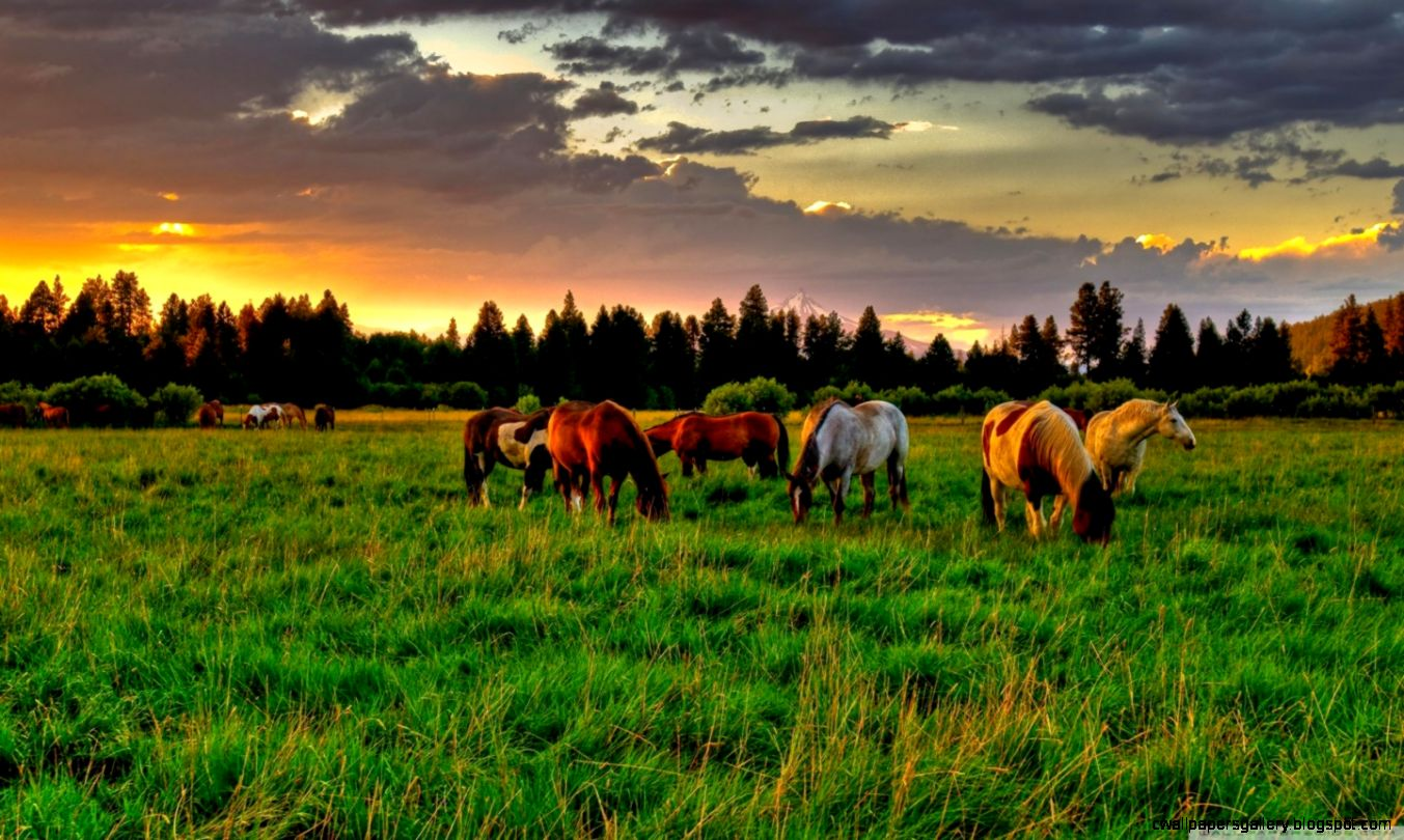 CCMC Named Management Company for Willowcreek Ranch  CCMC