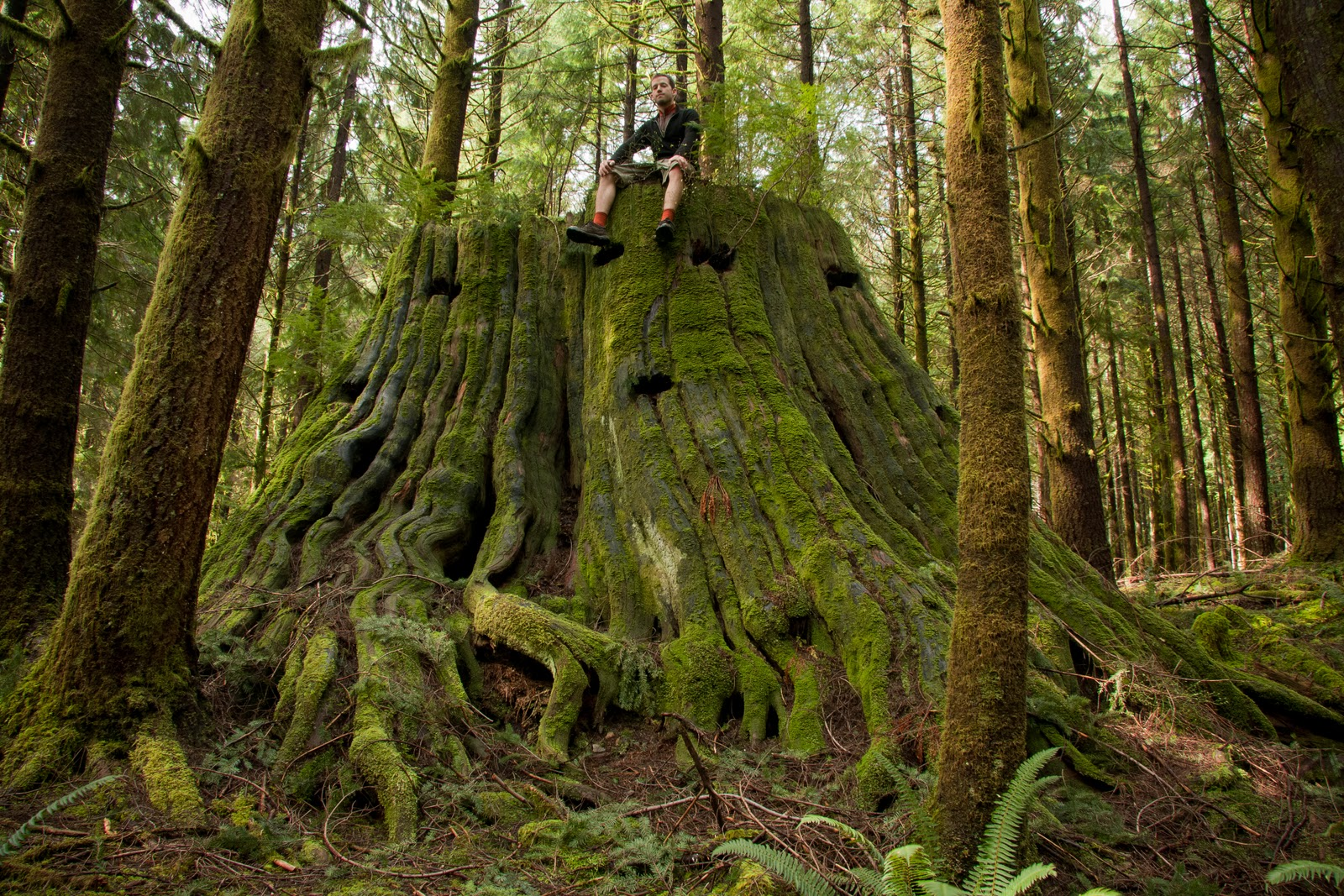 Seymour Old Growth Hike UBC Ancient Forest Committee A Return To The Temple Of Time Grove Giants