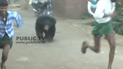 Animal rights activists are aghast at a video, which shows a group of villagers in Chitardurga district of Karnataka, thrashing a bear with sticks.  The video shows the bear inside a village running helter-skelter. A group of villagers are seen beating it brutally with sticks and stones.