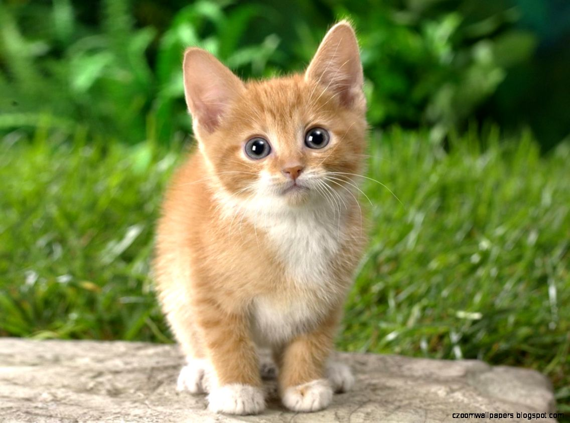 55 Cute Cat Pictures And Wallpapers  Stylonica