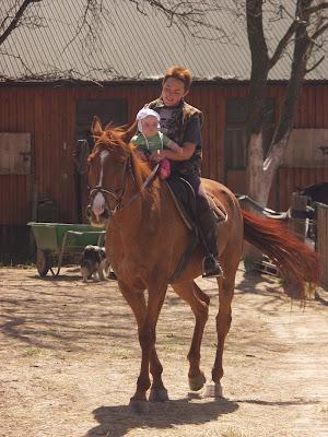 koń, konie, jazda konna, niemowlę, małe dziecko