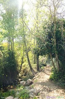 Luz atravesando la vegetación de Las Chorreras