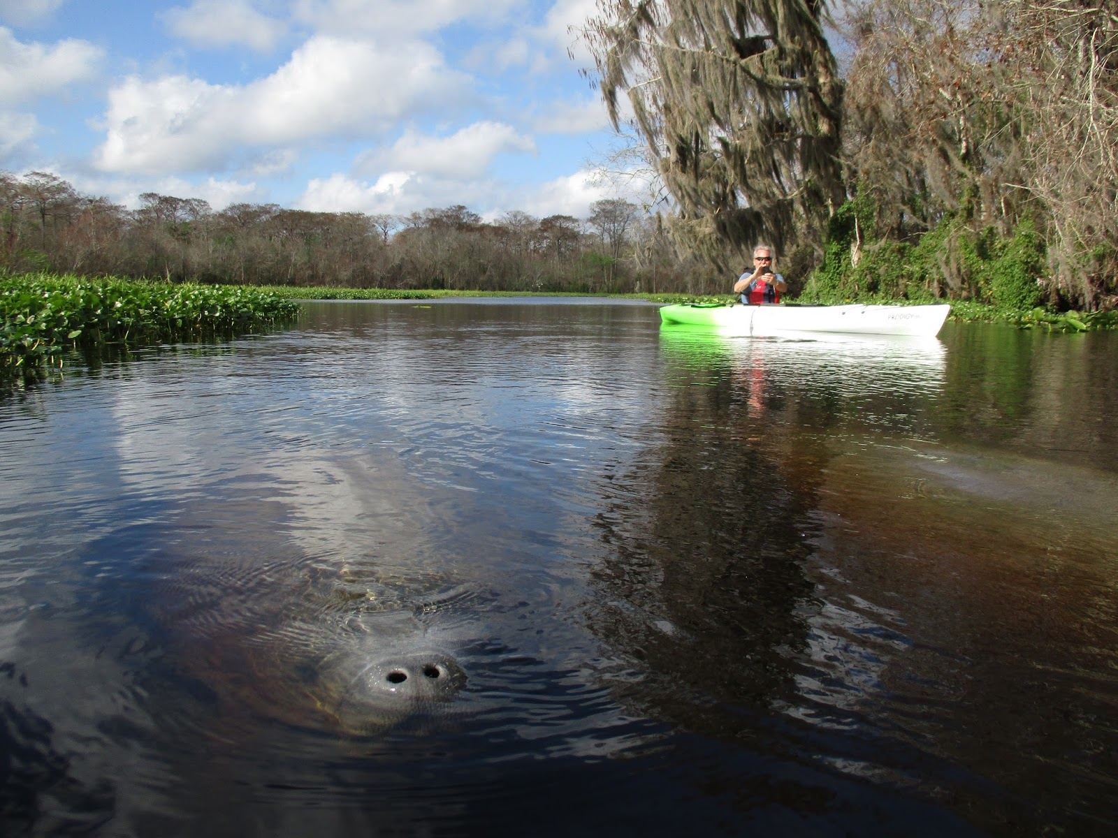 Kayak Near Kissimmee And Discover Florida S Wildlife The