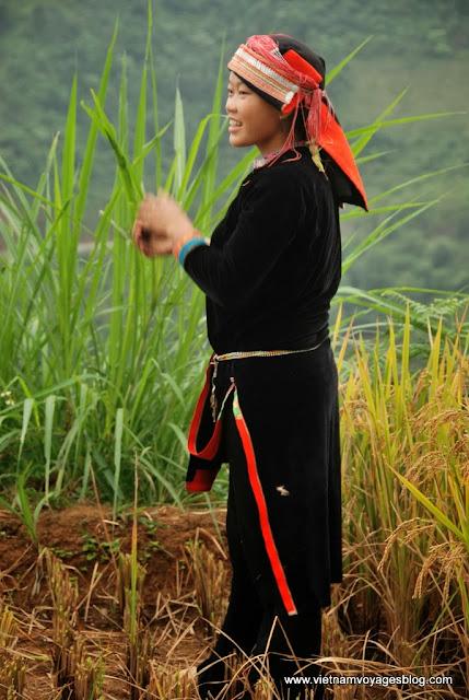 La saison de récolte du riz à Dong Van - Photo An Bui