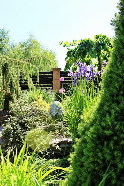 skalniak jakie rośliny,wymarzony ogró,ladiesdesigns,blog dom inspiracje DIy,choinka i krzewu w ogrodzie,porady ogrodowe,czosnek ozdobny w ogródku