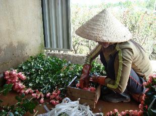 hoa da lat gia si