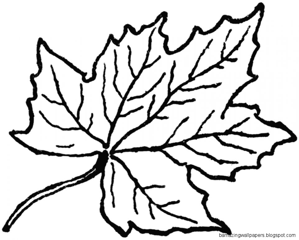 Black And White Leaf Clipart   Clipart Kid