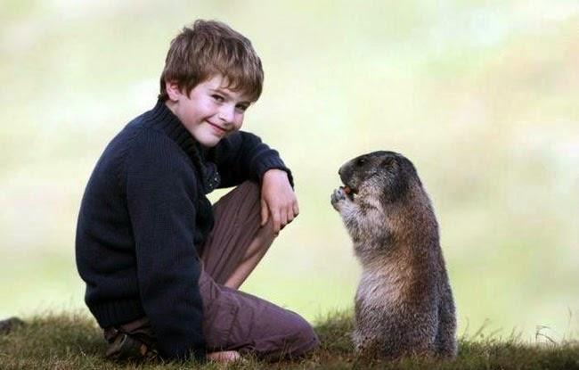 Kisah persahabatan Seorang Anak Kecil dengan Marmot