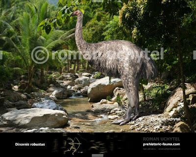 aves de hace miles de años Dinornis