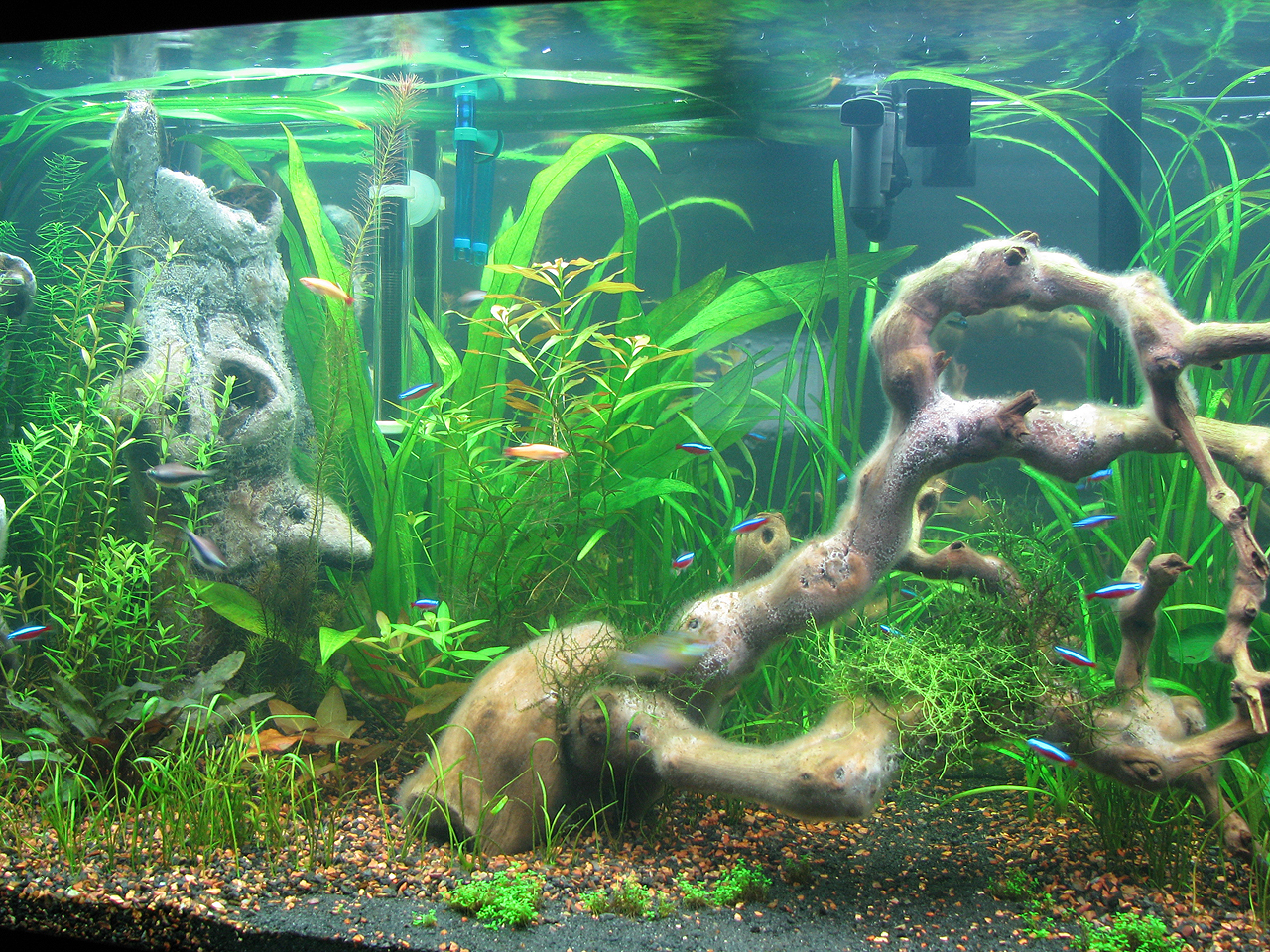 The fishtank white growth on red moore roots causes and for Fungus in fish tank