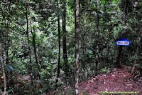 brunei Wasai forest