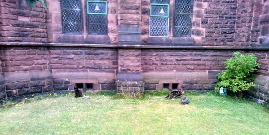 Stray cats outside a derelict church in Liverpool
