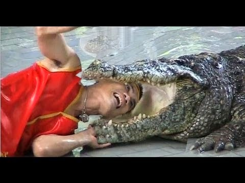 This Man Sticks His Arm In A Crocodile Stomach