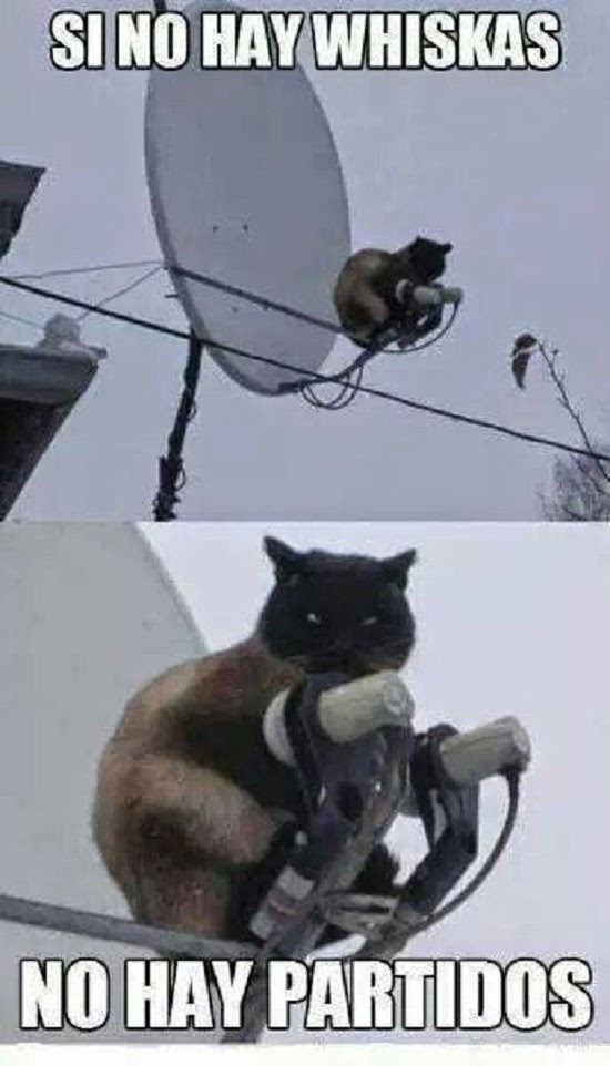 Dale sus whiskas al gato