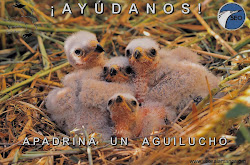 Campaa Aguilucho