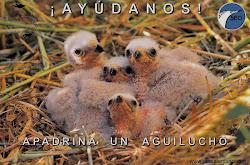Campaña Aguilucho