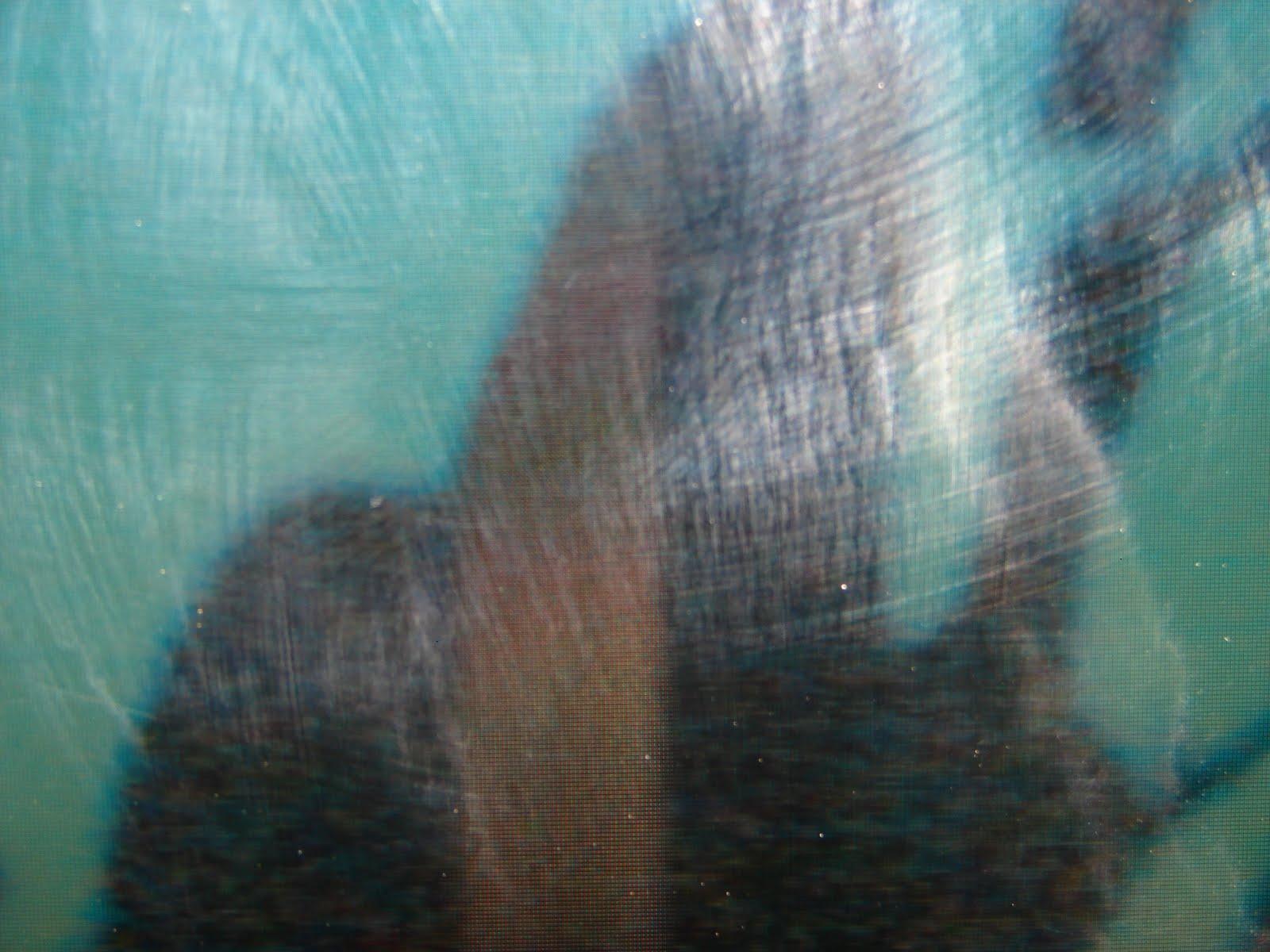 12-febrero avistamiento de ALIEN demonio reptiloide humanoide,hibridado sobre ,ramas