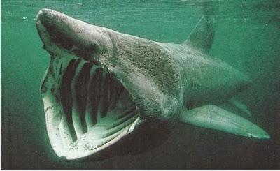 Ikan Hiu Dengan Bentuk Paling Menakutkan