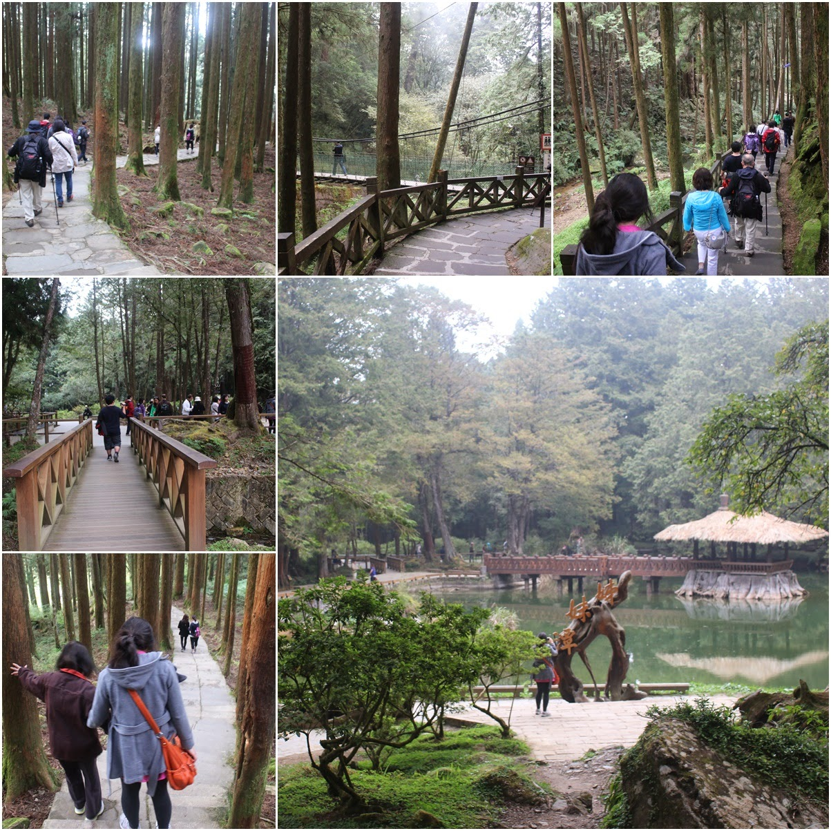 Hiking along forest scenic view of Alishan Sacred Tree at Alishan Mountain in Chiayi County of Taiwan