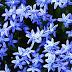 Biribirinden Güzel Çiçekler