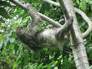 We also saw this this sloth. Pretty cool, huh? img