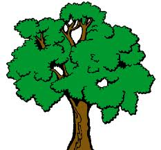 El Reino Vegetal Gua del docente