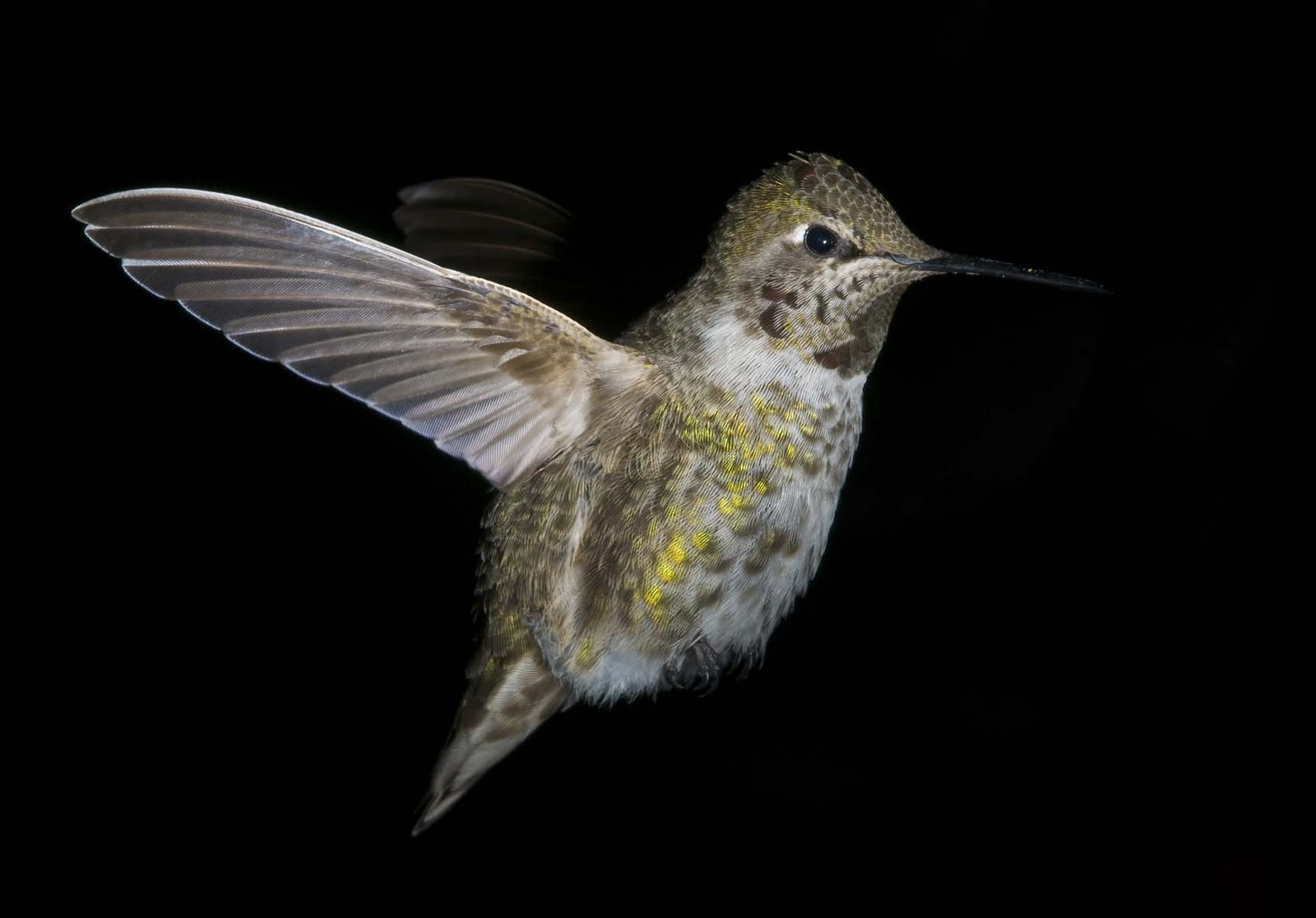 alasdair turner photography seattle backyard birds and how to