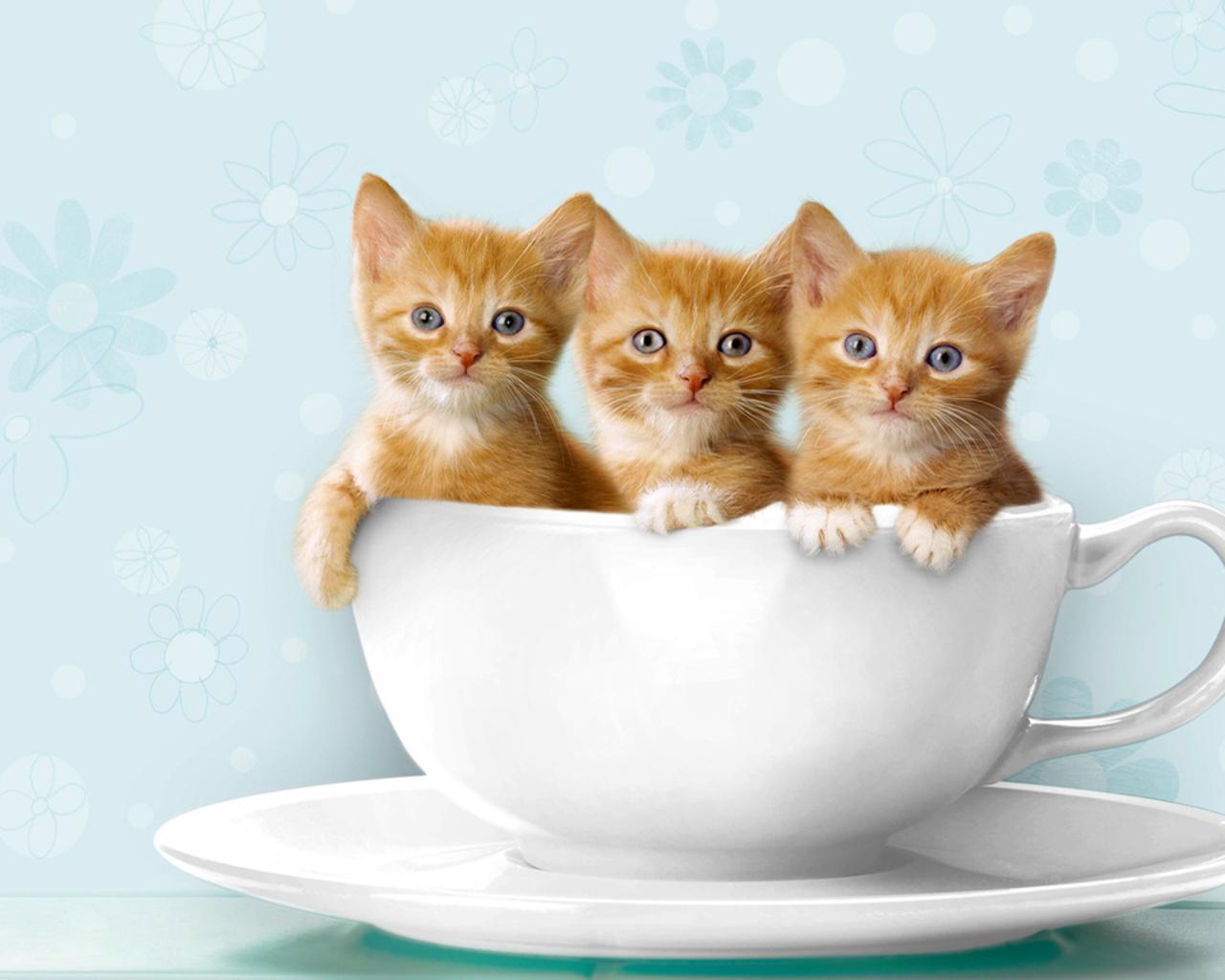 Funny Cats Ever | Unique Wallpaper