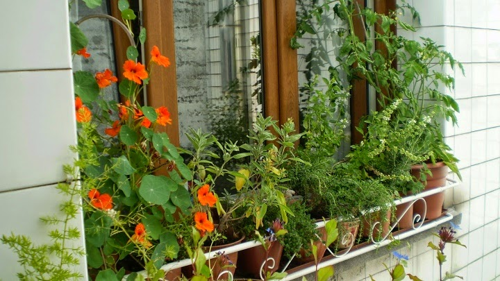 cmo decorar los alfizares en ventanas y balcones en diseo de jardines