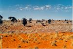 Deserto do Kalhaari
