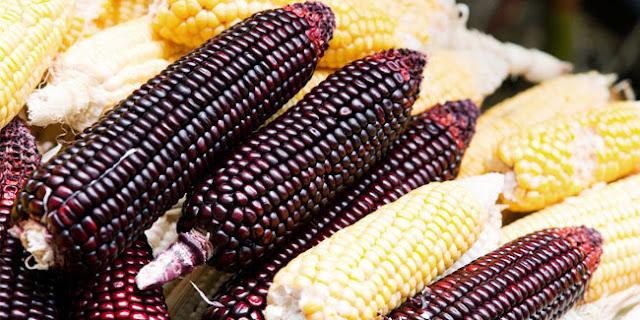 manfaat jagung ungu