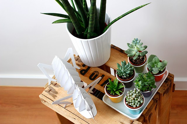 decoración de interiores obsesión cactus caja de fruta